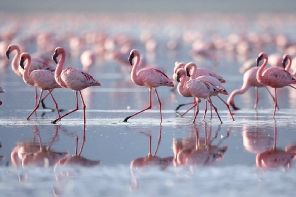Flamingos Ria Formosa